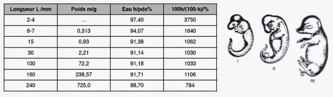 Tableau montrant le taux d'hydratation d'embryons de porc en fonction de la taille et du poids