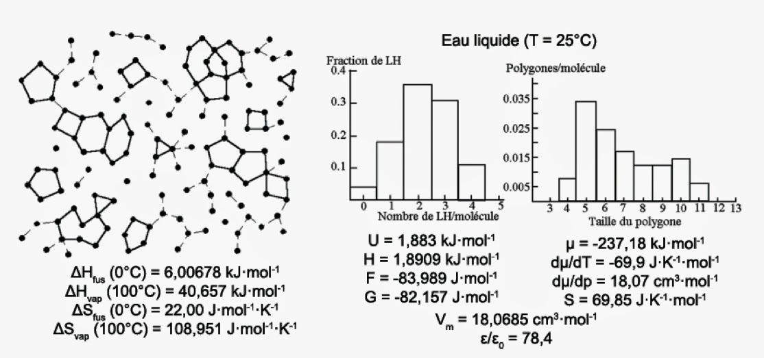 Eau liquide (structure)