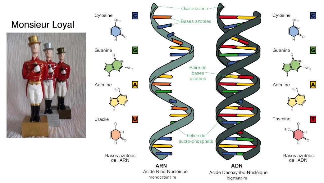 8•Monsieur Loyal ou le génome