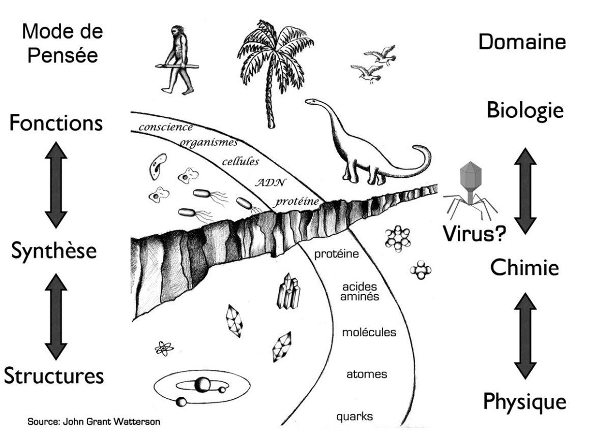 3•Les virus sont-ils des êtres vivants?