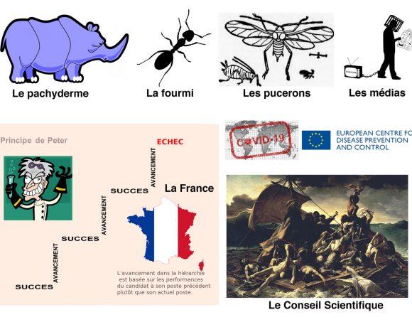 23•Les fourmis et le pachyderme